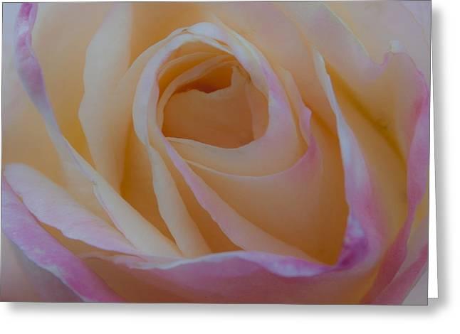 The Princess Diana Rose Greeting Card by David Patterson