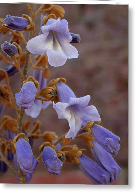Greeting Card featuring the photograph The Princess Flower by Paul Mashburn