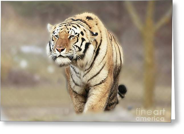 The Prowler Greeting Card by Inspired Nature Photography Fine Art Photography