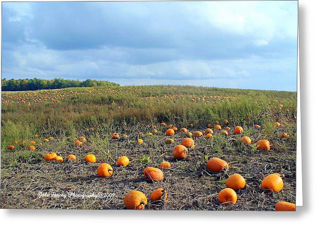 The Pumpkin Patch Greeting Card