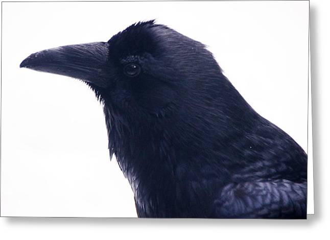 The Raven.  A Study In Black And White Greeting Card by Michael Courtney