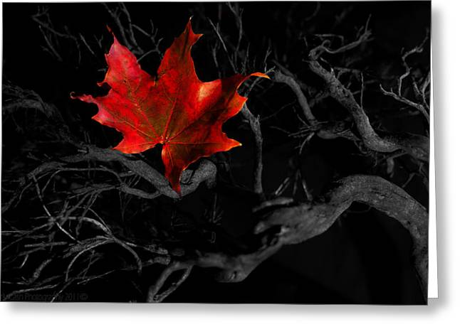 Greeting Card featuring the photograph The Red Leaf by Beverly Cash