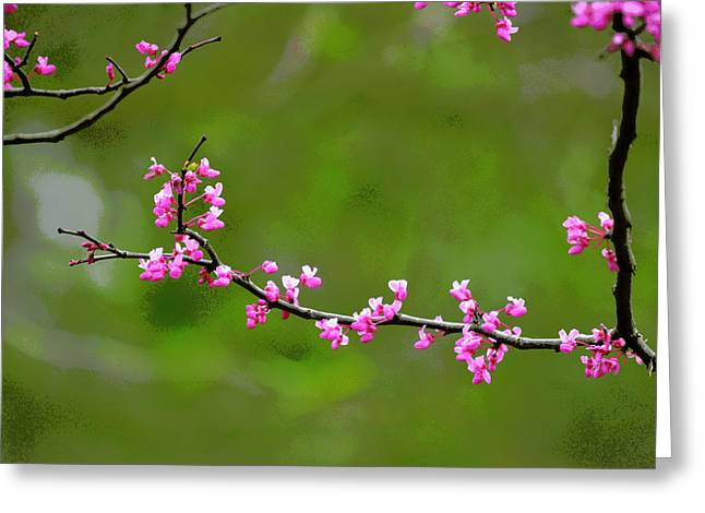 The Rite Of Spring Greeting Card