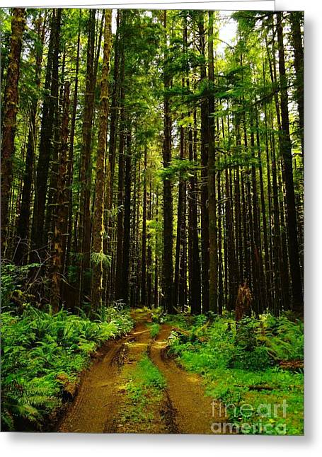 The Road Into The Green  Greeting Card by Jeff Swan