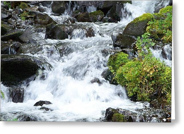 Greeting Card featuring the photograph The Roadside Stream by Chalet Roome-Rigdon