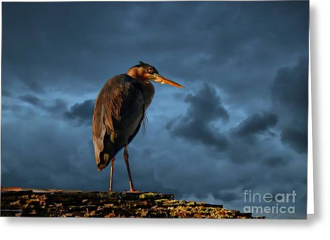 The Rooftop Watcher Greeting Card by Gail Bridger