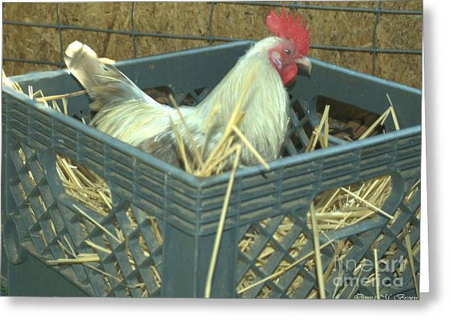The Rooster That Laid A Golden Egg Greeting Card by Donna Brown