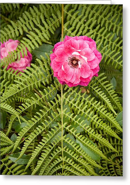 The Rose And The Fern Greeting Card by Sheri Van Wert