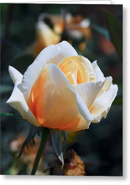 Greeting Card featuring the photograph The Rose by Fotosas Photography