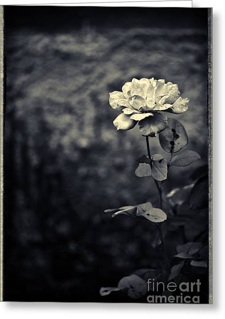 The Rose Greeting Card by Silvia Ganora