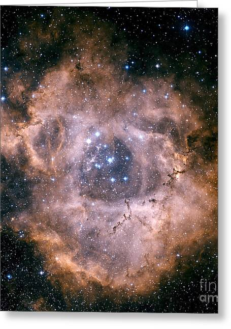 The Rosette Nebula Greeting Card by Charles Shahar