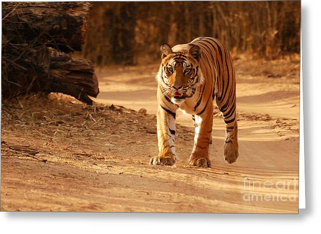 The Royal Bengal Tiger Greeting Card
