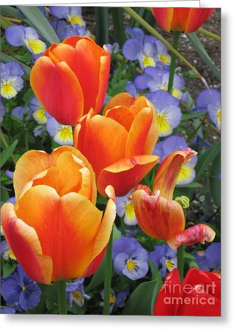 The Secret Life Of Tulips - 2 Greeting Card by Rory Sagner