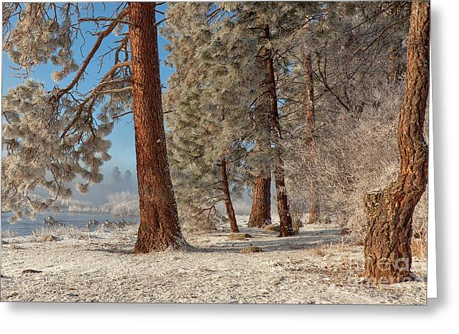 The Smell Of Pines II Greeting Card by Beve Brown-Clark Photography