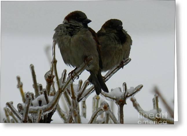 The Sparrows Greeting Card by Mariana Robu