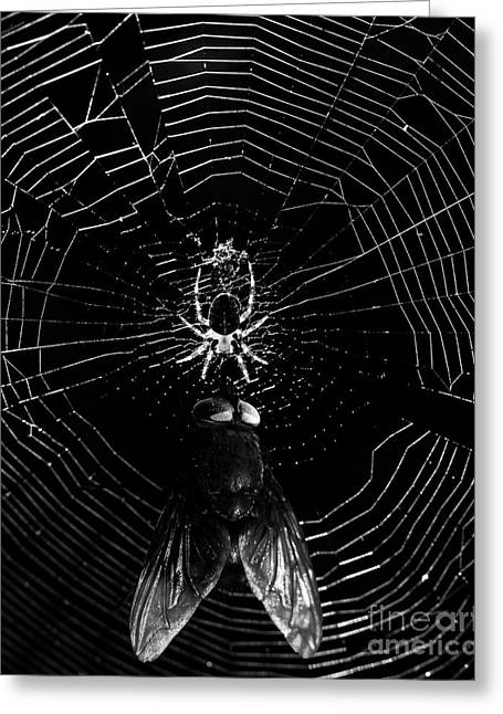 The Spider And The Fly . Black And White Greeting Card by Wingsdomain Art and Photography