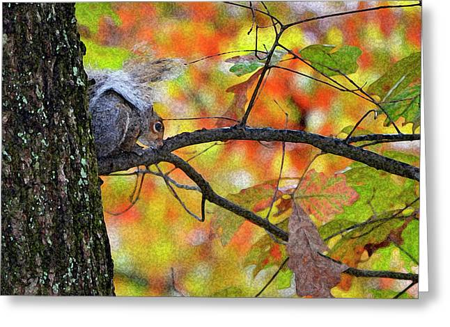 Greeting Card featuring the photograph The Squirrel Umbrella by Paul Mashburn