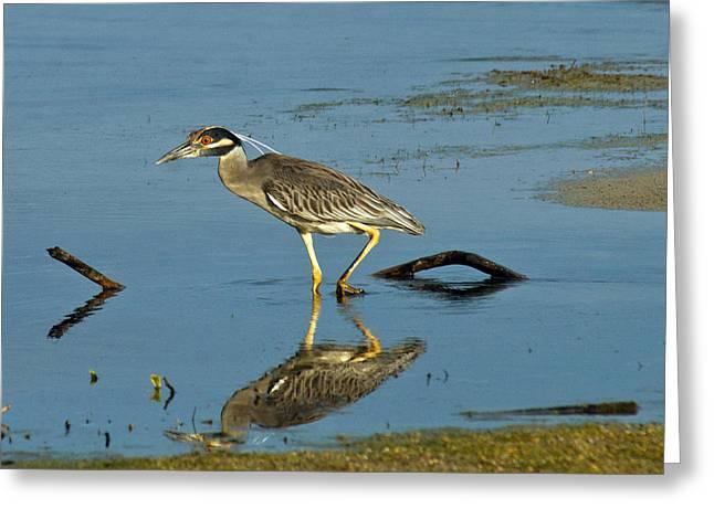 The Heron Stalker Greeting Card