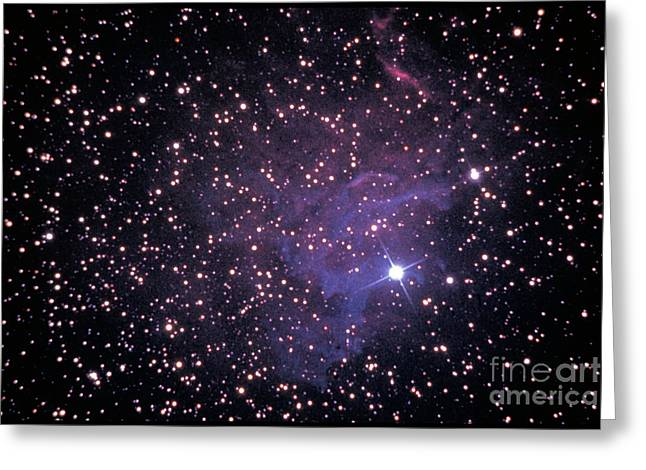 The Star Auriga Greeting Card by WARD'S Natural Science / Science Source