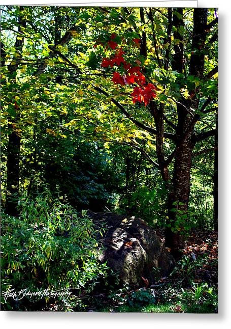 The Start Of Fall Color Greeting Card by Ruth Bodycott