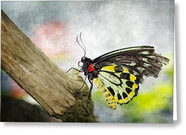 The Stillness Of A Butterfly Greeting Card by Laura George