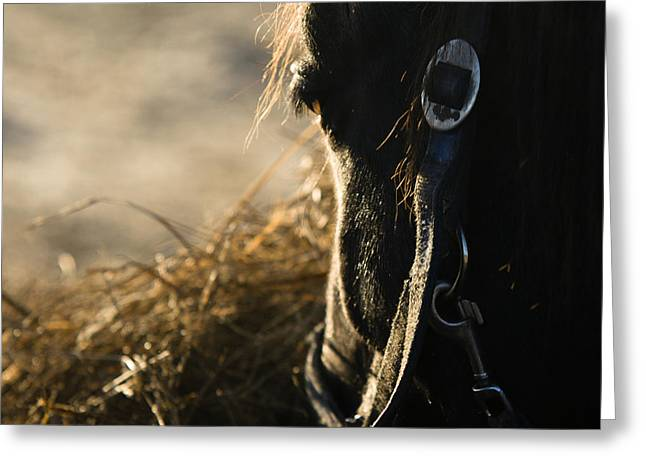 The Taste Of Fresh Hay  Greeting Card by Angel  Tarantella