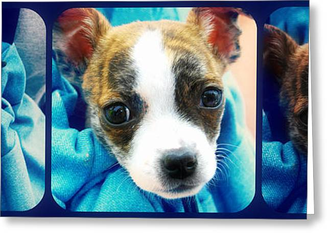 The Three Amigos Teacup Chihuahua Greeting Card by Peggy Franz