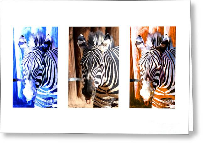 The Three Zebras White Borders Greeting Card by Rebecca Margraf