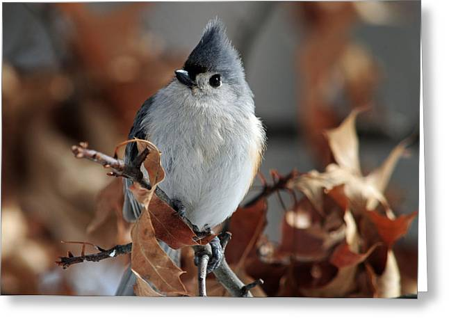The Titmouse Greeting Card by Mike Martin