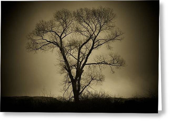 The Tree Greeting Card by Big E Photography