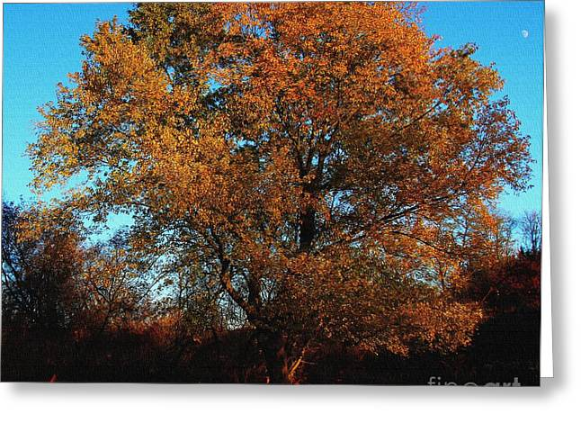 The Tree Of Life Greeting Card by Davandra Cribbie