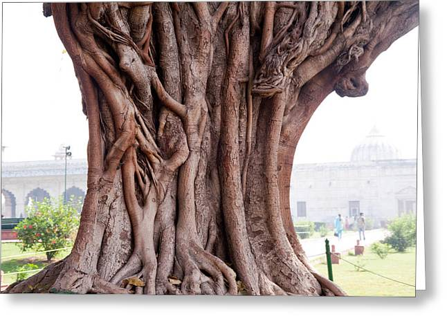 The Twisted And Gnarled Stump And Stem Of A Large Tree Inside The Qutub Minar Compound Greeting Card by Ashish Agarwal