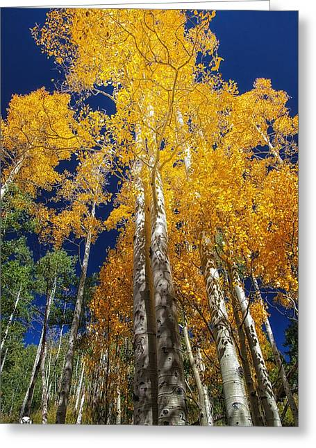 The Two Split Trees Greeting Card by Mitch Johanson