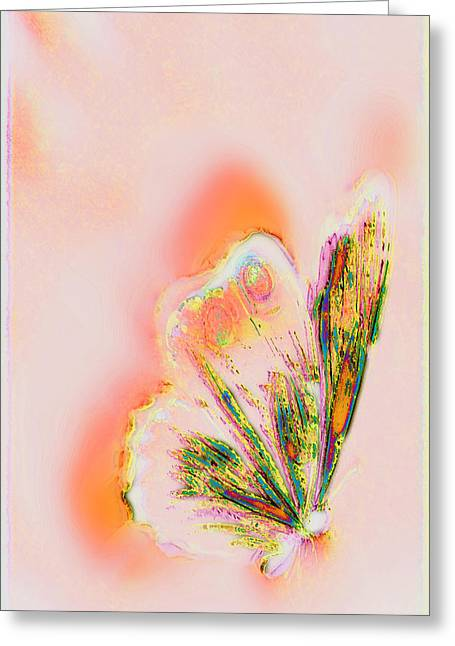 The Vibes Of A Butterfly's Mind Greeting Card by Li   van Saathoff