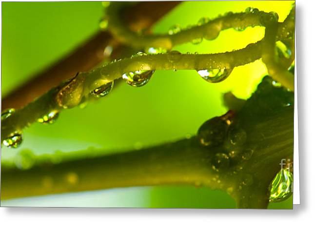 Greeting Card featuring the photograph The Vineyard After The Rain by Artist and Photographer Laura Wrede
