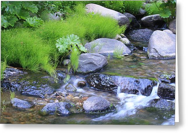The Waterfall Greeting Card by Nance Eakins
