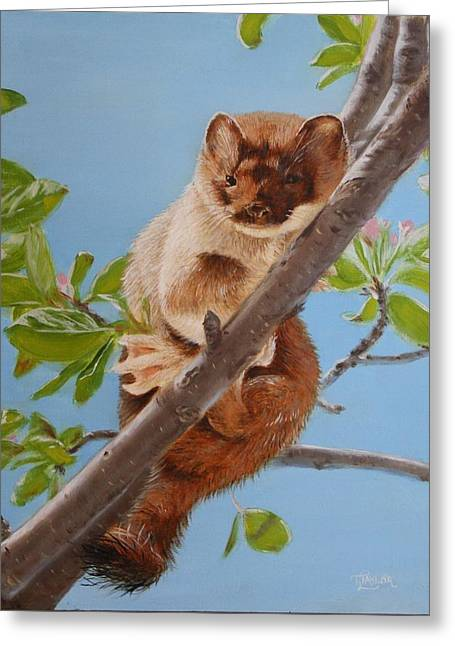 The Weasel Greeting Card