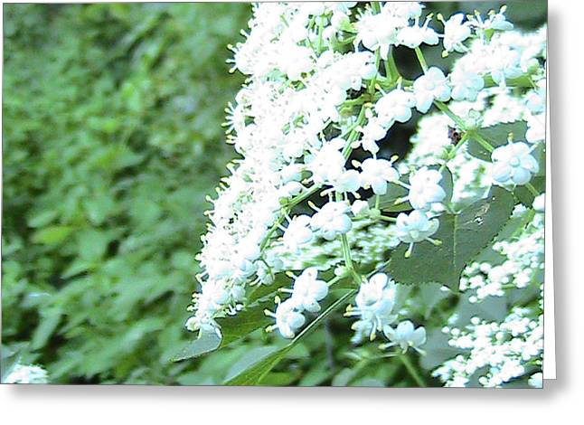The White Bloom Greeting Card by Rachel Snell