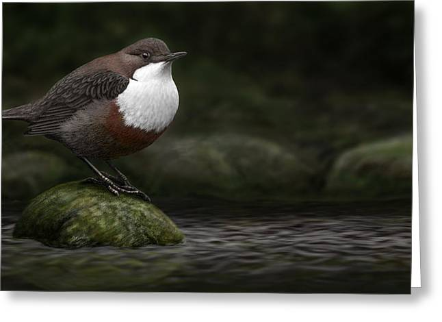 The White Throated Dipper Greeting Card by Deak Attila