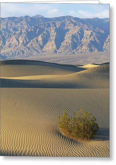 The Wind Creates Patterns In The Sand Greeting Card