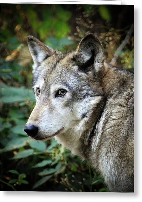 The Wolf Greeting Card by Steve McKinzie