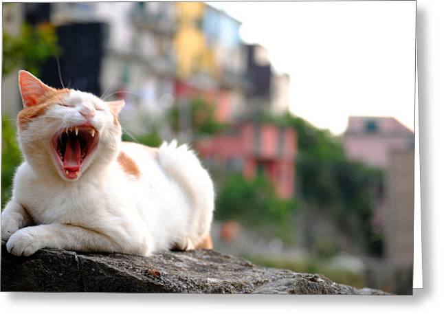 The Yawning White Cat Greeting Card by Neha Singh