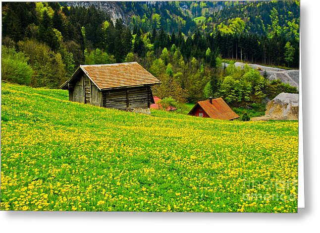 The Yellow Around Greeting Card by Syed Aqueel