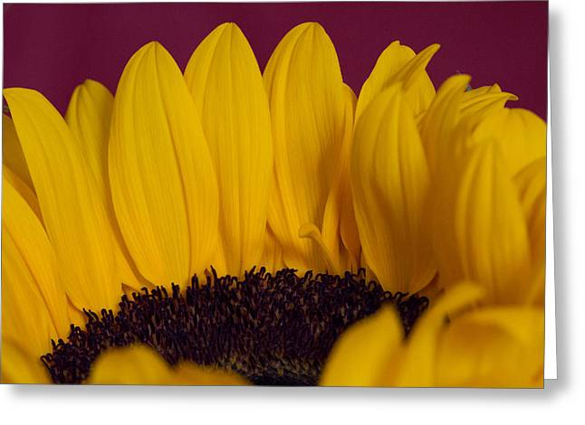 The Yellow Blossom Leaves Greeting Card by Andreas Levi