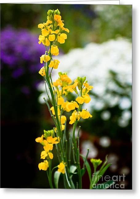 The Yellow Delight Greeting Card by Syed Aqueel