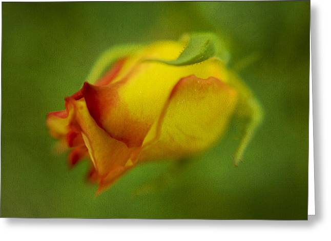 The Yellow Rose Greeting Card