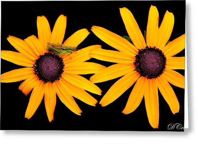 Greeting Card featuring the photograph The Yellow Rudbeckia by Davandra Cribbie