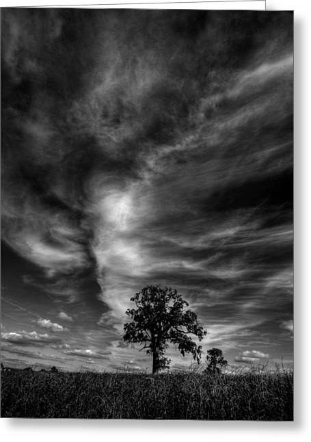 Greeting Card featuring the photograph There Can Only Be One by John Chivers
