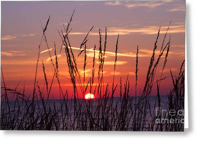There You Were At Dawn Greeting Card by Elizabeth Chevalier