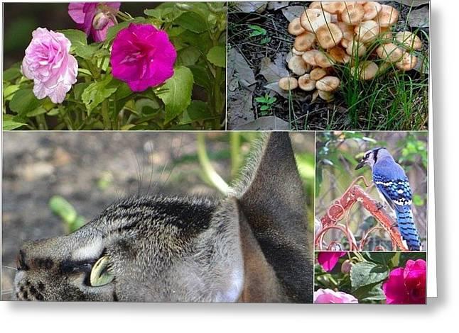 Things In My Backyard Greeting Card by Betty Berard